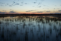 Wetland at sunset