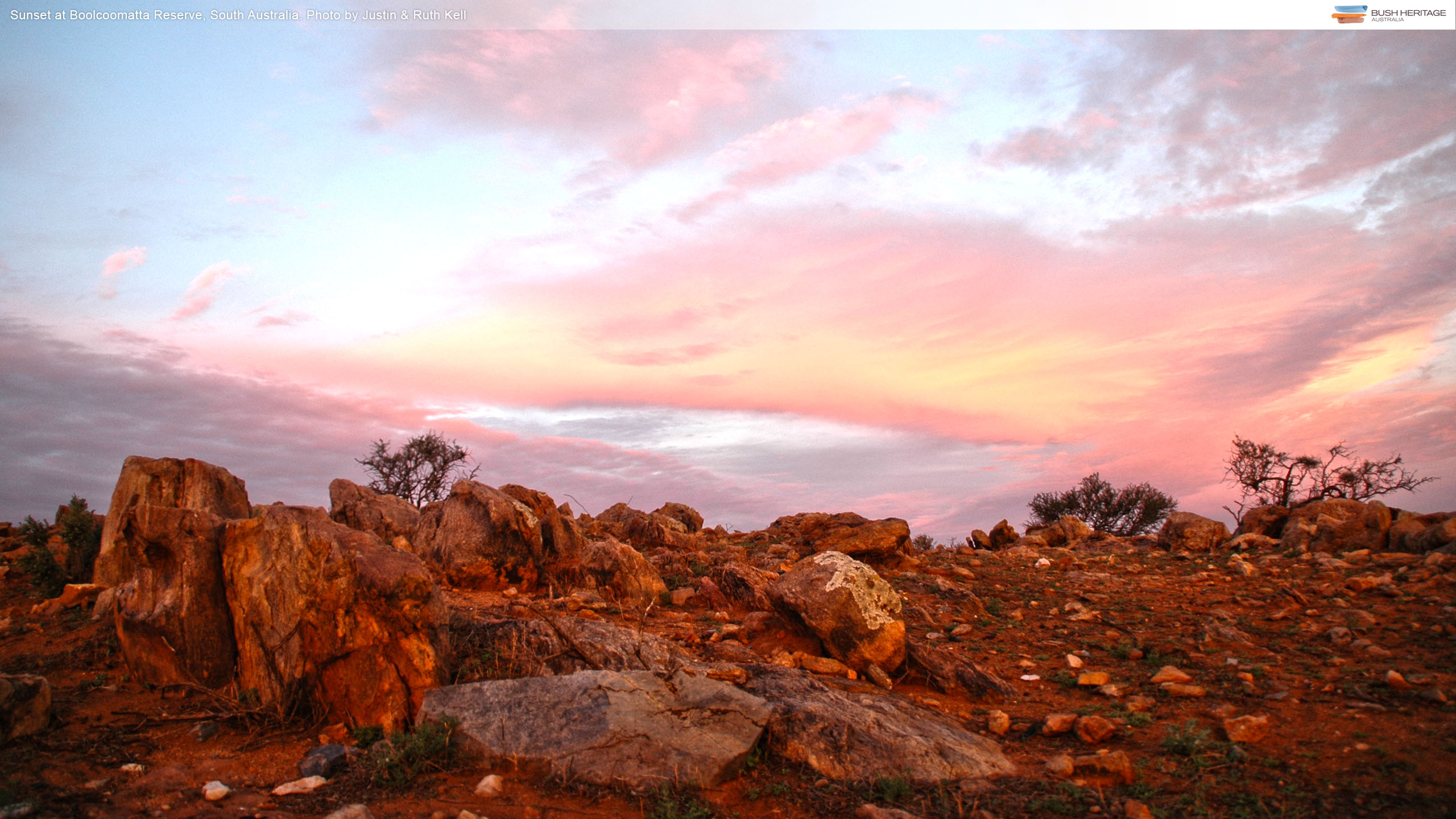 Sunset at Boolcoomatta Reserve, South Australia. Photo by Justin & Ruth Kell