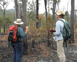 Ecologists examine burned country