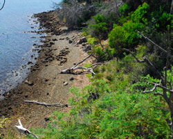 King George Island's rocky shores