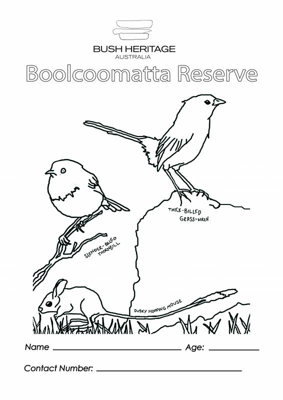 Colouring In Sheet For Boolcoomatta Reserve