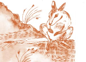 A rock wallaby illustration.
