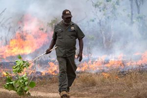 Otto Campion (Chair of ASRAC) lighting fires the traditional way in the Arafura Swamp. Photo Claire Thompson.