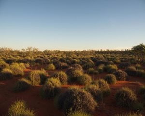 Sun rising over the spinifex on Ethabuka.