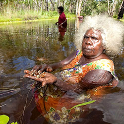 Mary Kolkiwarra, Warddeken Professor, collects ankodjbang (water peanut) from a freshwater stream.