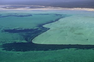 Seagrass beds in Hamelin Pool. Photo by Cineport Media.