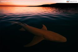 A shark patrols Uunguu – the living home of the Wunambul Gaambera people in WA. Photo Russell Ord.