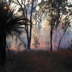Controlled burn on Carnarvon. Photo Emma Burgess.
