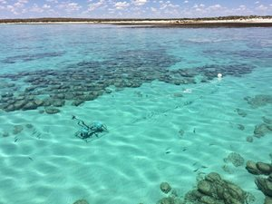 A BRUVS drop is carried out in the waters of Hamelin Pool, WA. Photo by Greg Suosaari.