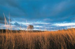 The intense colours of the grasslands on Carnarvon Reserve (Qld). Photo Wayne Lawler / EcoPix