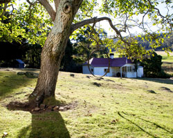 Photo of Oura Cottage and tree