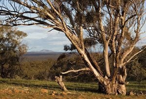 Davydd has seen the conservation work at our Nardoo Hills Reserves in Victoria for himself. Photo James Cowie.