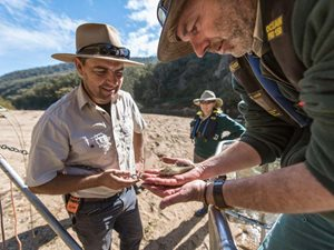 Scottsdale Reserve Manager Phil Palmer inspects a threatened Trout Cod, before releasing it back into the river. Photo Annette Ruzicka.