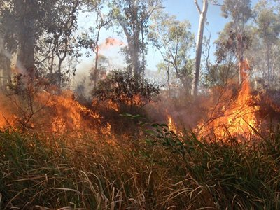 Burning Siam on Yourka Reserve.
