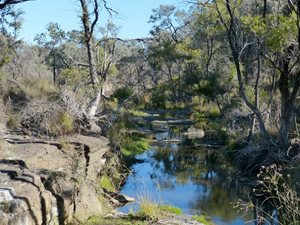 Myall Spring on Carnarvon Station Reserve, Queensland. Photo Peter Mills.