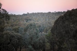 Overlooking the tree canopy at our Tarcutta Reserve. Photo Annette Ruzicka.
