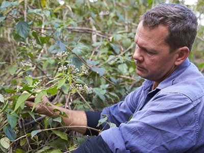 Reserve Manager Paul Hales with Siam weed at Yourka Reserve. Photo Martin Willis.