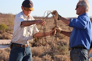 Kurt Tschirner & volunteer Tony Geyer removing fencing at Boolcoomatta Reserve. Photo Tamara Potter.