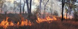 Prescribed burning on Carnarvon Station Reserve, Qld. Photograph by Emma Burgess