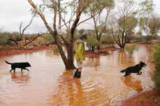 Reserve Manager Mike Chuk and his dogs splash through Homestead Creek at Bon Bon. Photo Julia Harris.