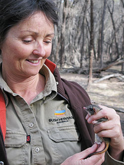 Bush Heritage ecologist Angela Sanders with phascogale in hand