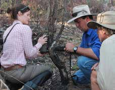 During the Bush Blitz in 2014, Carnarvon Reserve Manager Chris Wilson and BHP employee Ellen Couchman set up a sensor camera, watched by Murray Haseler. Photo Alison Wilson.