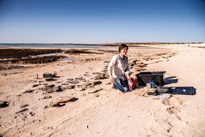 Dr Erica Suosaari on the beach at Hamelin Pool preparing for a biological survey. Photo Annette Ruzicka.