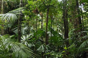 A scene from our Fan Palm Reserve. Photo Craig Allen.