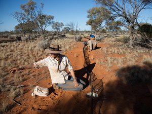 Bush Heritage Project Officer Kate Taylor checks a pitfall trap. Photo by Carly Earl/The Guardian.