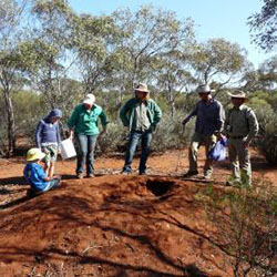 Inspecting a mallee fowl nest
