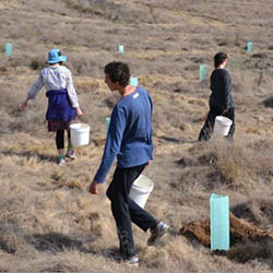 Volunteer tree planters carrying water