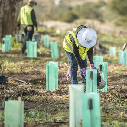 Volunteers and revegetation at Scottsdale. Photo Annette Ruzicka.