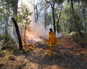 A controlled burn carried our at Reedy Creek Reserve. Photo Steve Heggie.