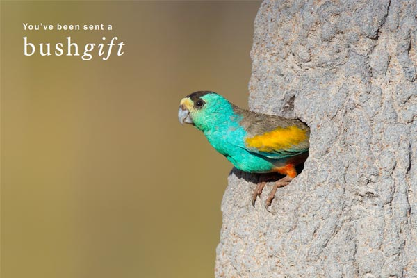 Golden-shouldered Parrot Card