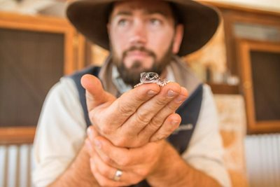 Ecologist Ben Parkhurst with a Smooth Knob-tailed Gecko at Hamelin Station. Photo Annette Ruzicka.