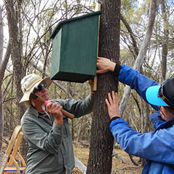 Angela Sanders supervises as volunteers set up a new nesting box.