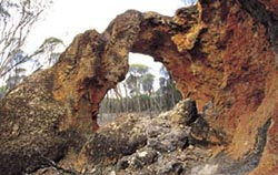 Rock bridge formed by years of weathering on Charles Darwin Reserve. Photo Jiri Lochman / Lochman Transparencies.