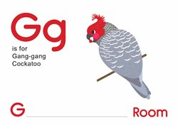 G is for Gang Gang Cockatoo.