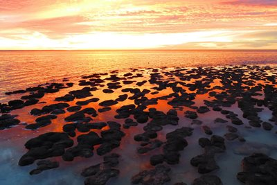 Stromatolites at sunset.