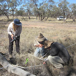 Using a quadrat to count species and assess groundcover. Photo by Sue Akers.