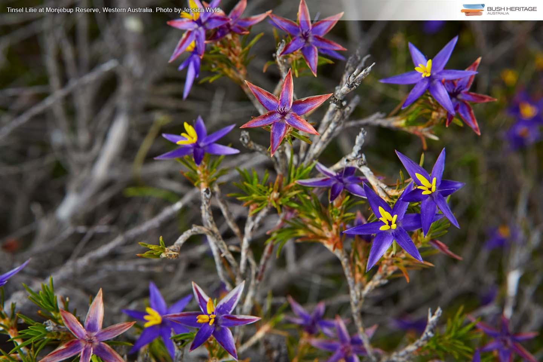 Free Desktop Wallpapers - Bush Heritage Australia