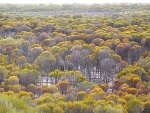 Woodlands on Charles Darwin Reserve. Photo Bron Willis.
