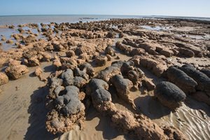 Marine stromatolites at Hamelin Pool. Photo Jiri Lochman / Lochman Transparencies.