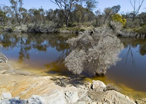 Freshwater pool surrounded by bushland, swamp paperbark (melaleuca sp.) in foreground.