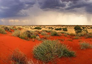 A desert storm moves across Cravens Peak Reserve, Qld, at the end of a major boom event in 2011. Photo Dr Aaron Greenville.