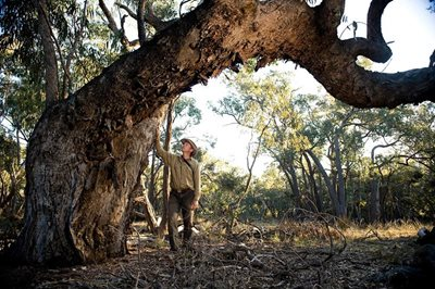 Reserve Manager Jeroen van Veen with in the old growth woodland. Photo Matthew Newton.