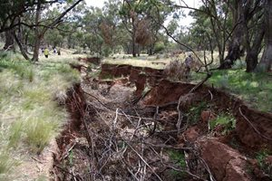 Volunteers inspect an erosion gully full of tree branches at Nardoo Hills in Victoria. Photo Craig Allen.