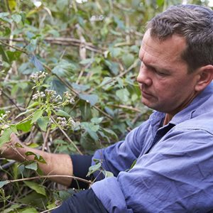Reserve Manager Paul Hales battles Siam weed. Photo Martin Willis