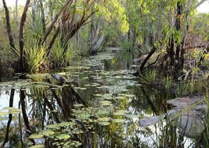 Pandanus Creek at Truscott. Photo Peter Martin.