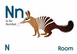 N is for Numbat.